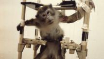 動物實驗的三大問題 (PETA)