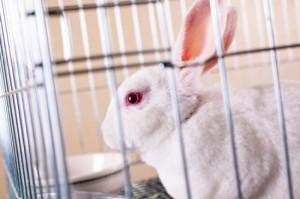 動物實驗的替代方法 (文:PETA Asia)