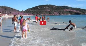 30條海豚巴西擱淺,當地人齊心拯救