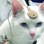 迷思揭穿,動物實驗是偽科學 (PETA Asia)