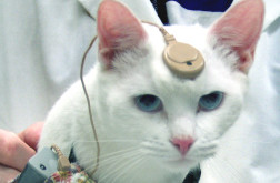catcochlear