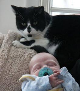 伴侶動物會讓孕婦生病嗎?(PETA)