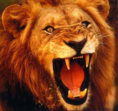 lion-thumb-400x375