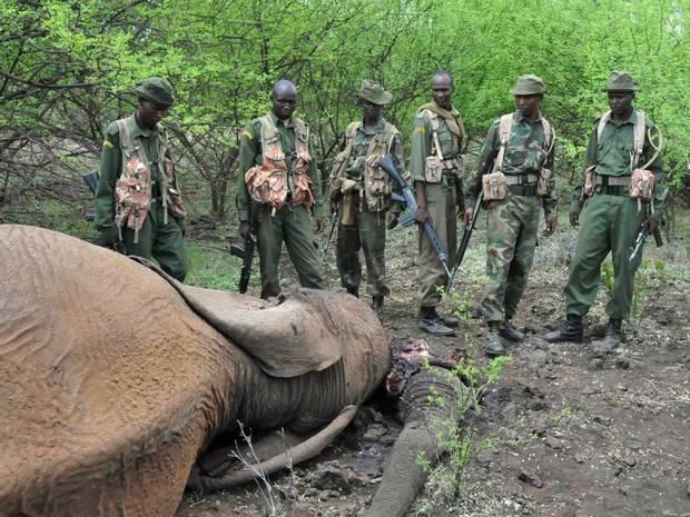 Elephant-AFP