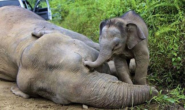 Elephants-GETTY-440672