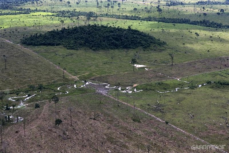 Deforested Area for Cattle Ranching in Brazil