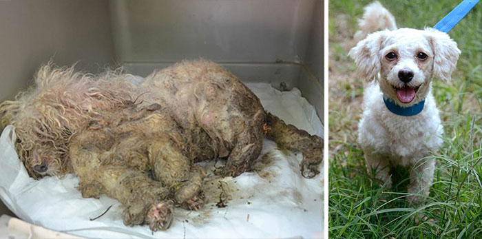 dog-makeover-before-after-rescue-15-2
