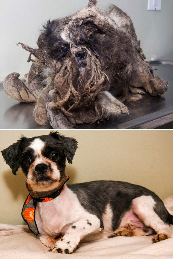 dog-makeover-before-after-rescue-35-2