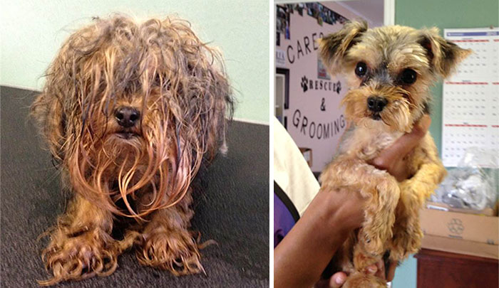 dog-makeover-before-after-rescue-4-2