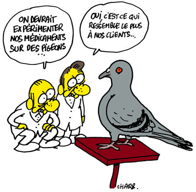 Charlie-Hebdo-Pigeon-by-Charb