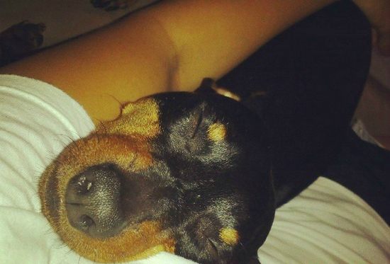 Dog-Cuddling