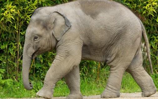 為甚麼騎大象是個可怕的主意