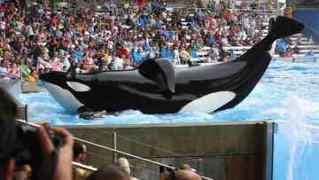 《黑鲸》一部震撼人心的紀錄片