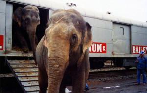 好消息:美國舊金山禁止一切動物表演!