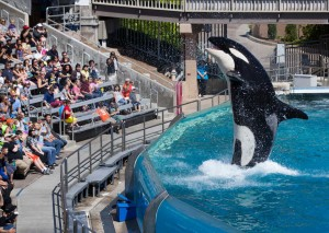 前訓練員公開指責海洋世界(SeaWorld)囚禁鯨魚