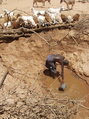 密集耗水的畜牧業,令到原本已經缺水的社區承受更大的壓力。Photo: creative commons.