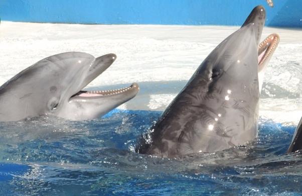 Dolphin-with-Rake-Marks-602x390