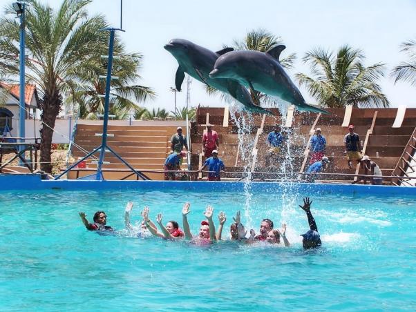 Swim-With-Dolphins-Trick-602x452