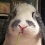 看看我化妝包裡的無動物實驗產品!