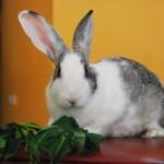 世界各地禁止化妝品動物實驗已成趨勢(PETA)