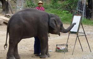 大象畫畫的心酸真相