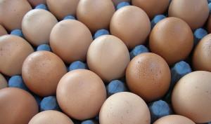 非吃雞蛋不可?打破雞蛋的神話(文: 盧麗愛醫生)