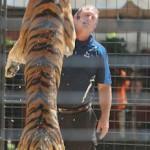 老虎被餓至骨瘦如柴,於美國遊樂場被強迫表演