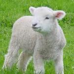 動物不是我們的衣服 | 皮革、羊毛、蠶絲 PETA Asia