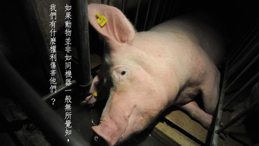 母豬狹欄二