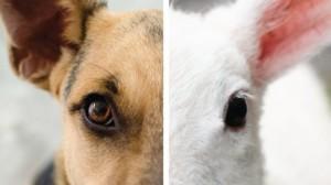 肉食主義:為什麼我們覺得吃動物是如此地正常?