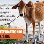 十大理由:拒絕支持「捐贈動物」的組織|以「小母牛」為例